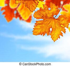 beau, feuilles, arbre, automne, fond, frontière