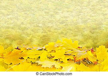 beau, feuilles automne, érable, fond