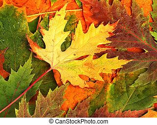 beau, feuilles, automne, conception, baissé, toile de fond