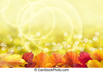 beau, feuilles automne, fond, viburnum