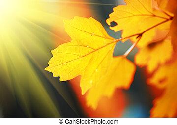 beau, feuilles automne, soleil, jaune