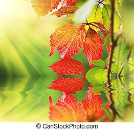 beau, feuilles automne, soleil, rouges