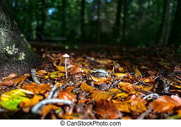 beau, feuilles, mycètes, automne, lumière soleil, automne, forêt