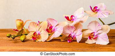 beau, fleur, bois, panorama, phalaenopsis, fond, fleurir, brindille, composition, orchidée
