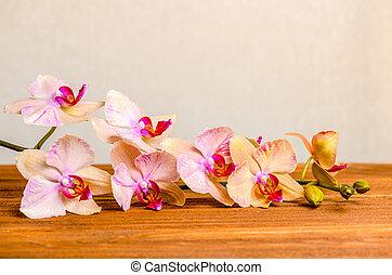 beau, fleur, bois, phalaenopsis, fond, closeup, fleurir, brindille, composition, orchidée