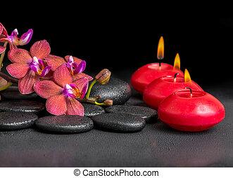 beau, fleur, fleurir, spa, ph, brindille, composition, rouges, orchidée