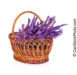 beau, fleur, isolé, sauvage, violet, panier, blanc