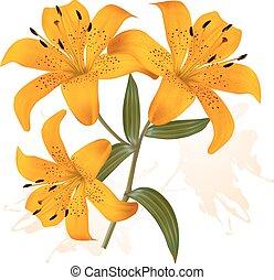 beau, fleur, lilies., fond, trois, vector.