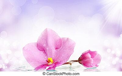 beau, fleur rose, rosée