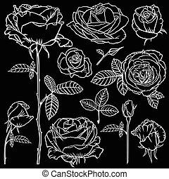beau, fleur, roses, ensemble, arrière-plan noir, contour
