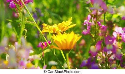 beau, fleurs, été, champ, jardin