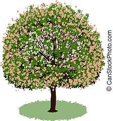 beau, fleurs, arbre