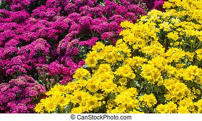 beau, fleurs, dans jardin