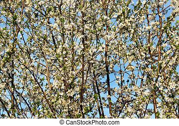 beau, fleurs, fleur, arbres