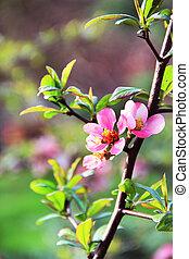 beau, fleurs, fleur, sakura