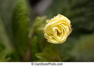 beau, fleurs, fond