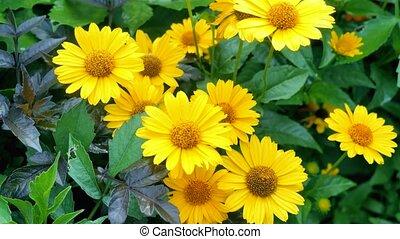 beau, fleurs, jaune