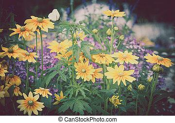 beau, fleurs, parterre fleurs, jaune, rudbeckia