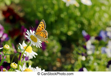 beau, fleurs ressort, agréable, butterfly.