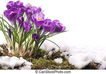 beau, fleurs ressort, art