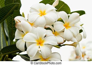 beau, fleurs ressort