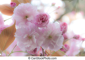 beau, fleurs ressort, fond