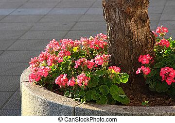 beau, fleurs ressort, jardinier
