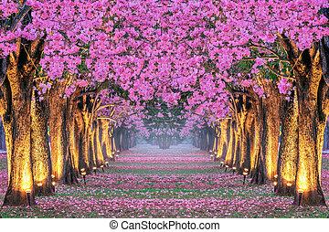 beau, fleurs roses, rangées, arbres.