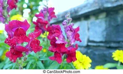 beau, flowers., jardin, rouges
