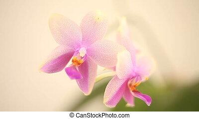 beau, fond, rare, blanc, pot, orchidée