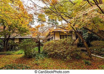 beau, forêt automne, cabine