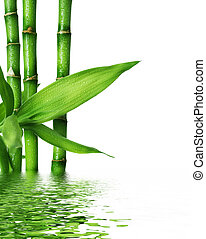 beau, frais, bambou