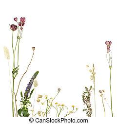 beau, frontière florale