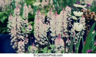 beau, garden., correction., très, couleur, fleurs