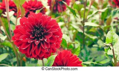 beau, garden., fleurs, correction., couleur, slider., dos, appareil photo, mouvements