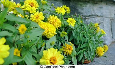 beau, garden., fleurs, yellov