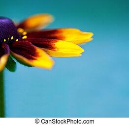 beau, gros plan, fleur