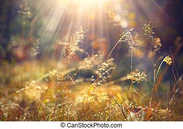 beau, herbe, nature, lumière, matin, automne, arrière-plan., closeup, soleil, rosée