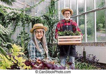 beau, heureux, bois, personnes agées, marche, pots, couple, chapeau, fonctionnement, quoique, barbu, chemise, personne âgée femme, greenhouse., vert, elle, homme, fleurir, regarder, usines, checkered, boîte
