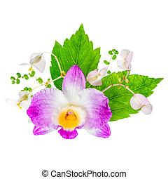 beau, hibiscus, dendrobium, fleur, bégonia, composition