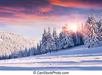 beau, hiver, arbres., neige, matin, couvert