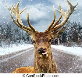beau, hiver, grand, cornes, cerf, route pays