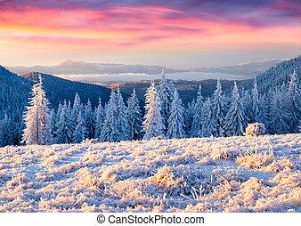 beau, hiver, levers de soleil, dans montagnes