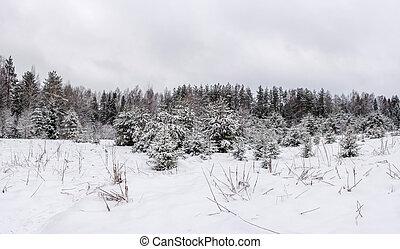 beau, hiver, milieu, partie, russia., paysage