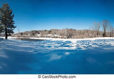 beau, hiver, neige, Arbres, couvert, paysage