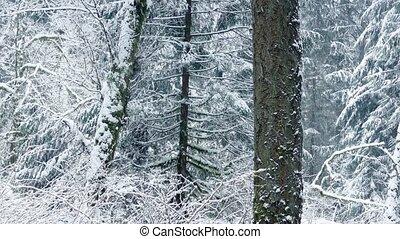 beau, hiver, neige, forêt, dépassement, tomber