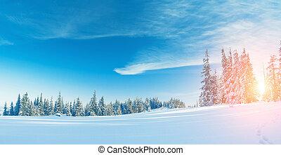 beau, hivernal, paysage