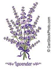 beau, illustration., bouquet, lavande, flowers., botanique