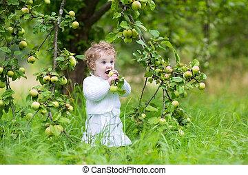 beau, jardin, automne, rire, dorlotez fille, cueillette, pommes