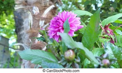 beau, jardin fleur, coloré, flowers., divers
